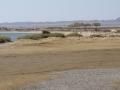 Lahmi-Camel