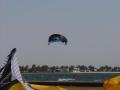 walvis001