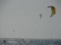 walvis002